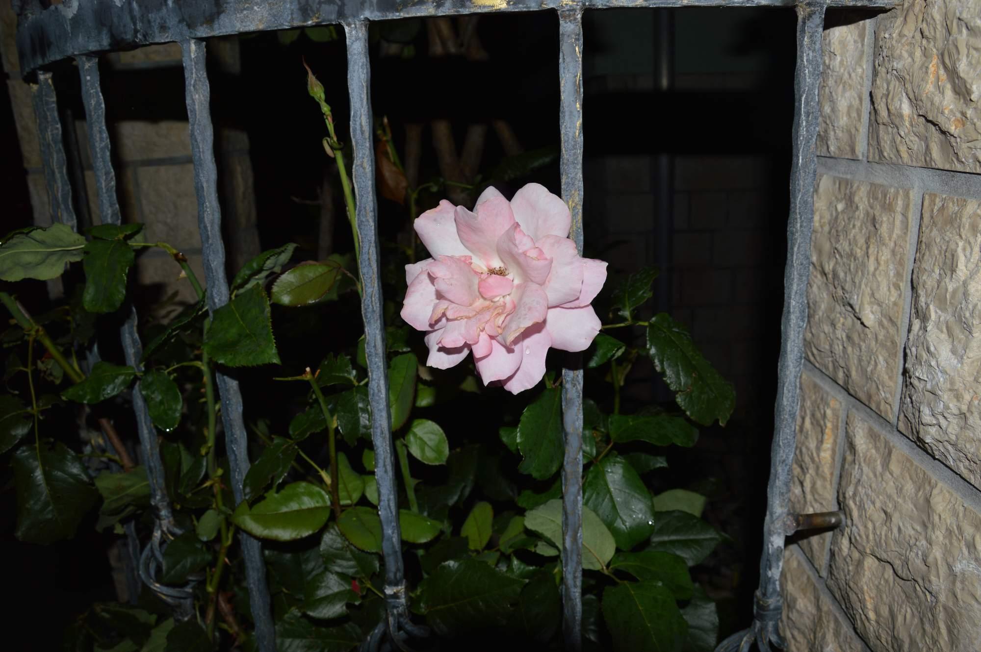 http://img19.rajce.idnes.cz/d1902/11/11369/11369498_ba1b1cc51aa2b100ecd01c05fe1b9075/images/DSC_0122.jpg