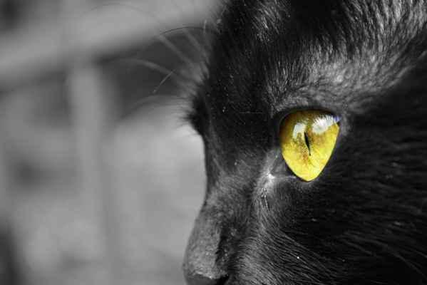 Nejdrzejší kočka na světě. Psa byla na mrtvici, protože měla zákaz jí zakousnout.