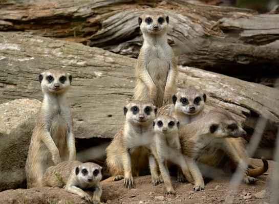 Jednou jsme  z Černýho Dolu na chvíli vypadli, ani né tak mezi lidi, jako mezi surikaty do Dvora Královýho. Za tuhle rodinnou fotagrafii děkuji pse, ze který se ty malý prdi mohli zbláznit.