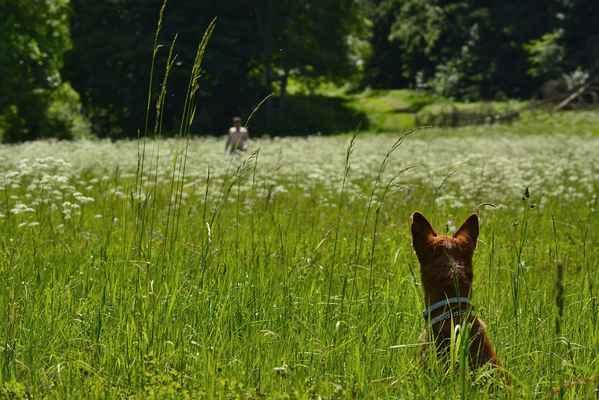 """No a tady vidíte tu psí sralbotku ve vysoký trávě. Dokud si neni na 100,1% jistá, že se vrácí právě ten náš houbař z lesa, tak se vode mě nehne. O pár dní pozdějí, tam někde za zády houbaře, jsem ztratila makročočku. """"A přibližně v kterejch místech jsi jí ztratila?""""  ....no zas jí našel!"""