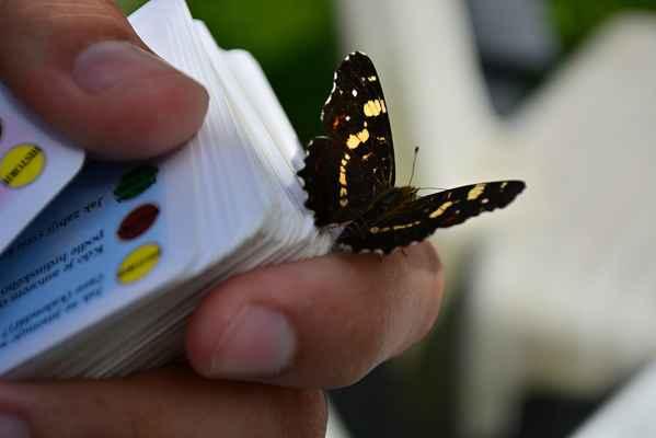 No jak jsem před tim mluvila o těch motýlech, tak tahle síťkovaná babočka (asi teda) si na nás jeden den fakt zasedla....s jedním pubošem hrála společenské hry...