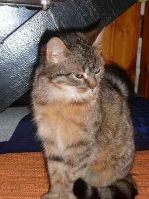 Tuk mokré kočička obrázky