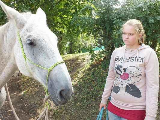 Kůň, ušlechtilé zvíře.