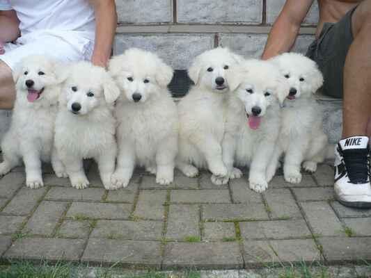 from left:  female: Phoenix; male: Parker, Phaeton, Phineas, Portos, Preston