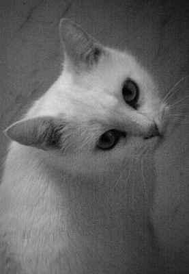 Nahé grily kočička