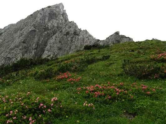pohled vzhůru na východní výběžek Trawengu